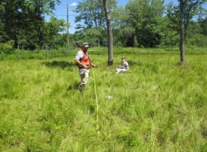 wetlands-72024_450x332