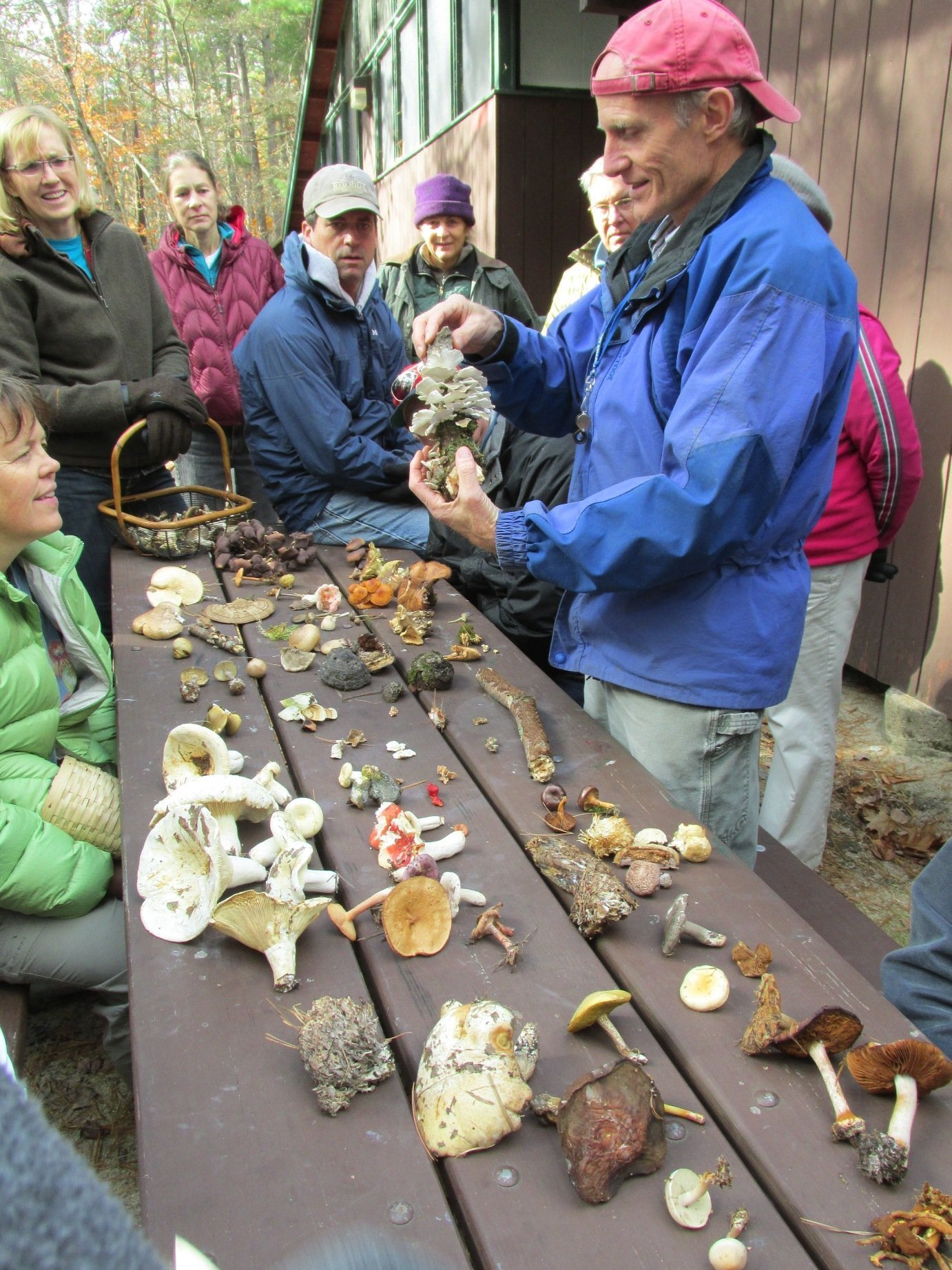 Annual Mushroom Program and Foray, Tin Mountain Conservation Center